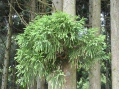 木材の耐用年数や耐朽性 腐朽に強い樹種は?